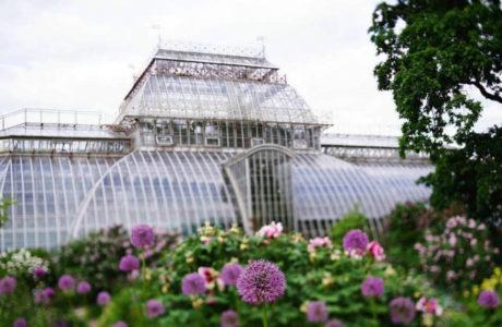 Ботанический сад в Санкт-Петербурге.